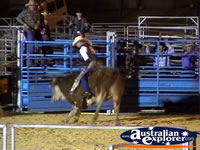 Bull Rider at Rodeo . . . CLICK TO ENLARGE