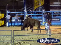 Riding a Bull at Rodeo . . . CLICK TO ENLARGE