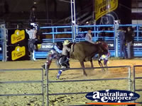 Action Shot of Bull Riding . . . CLICK TO ENLARGE