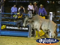 Angry Bull at Rodeo . . . CLICK TO ENLARGE