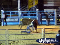Bull Riding at Rodeo . . . CLICK TO ENLARGE