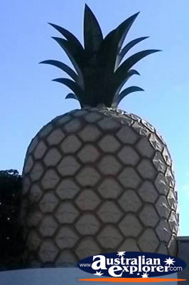 4wd Car Rental >> BIG PINEAPPLE IN GYMPIE PHOTOGRAPH, BIG PINEAPPLE IN ...