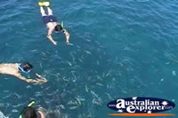 Snorkelling with Fish . . . CLICK TO ENLARGE
