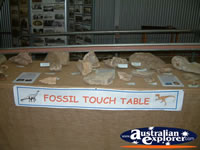 Hughenden Museum Fossil Touch Table . . . CLICK TO ENLARGE