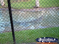 Australia Zoo Crocodile in the Water . . . CLICK TO ENLARGE