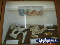 Winton Corfield & Fitzmaurice Centre Fossil Display . . . CLICK TO ENLARGE