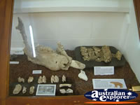 Winton Corfield & Fitzmaurice Centre Fossils . . . CLICK TO ENLARGE