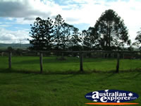 Gympie Gate Paddock . . . CLICK TO ENLARGE
