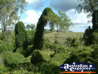 Natural Wonders at Gympie Gate . . . CLICK TO ENLARGE