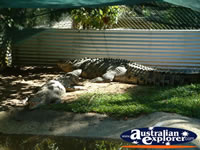 Croc Viewing Area at Johnstone River Croc Farm in Innisfail . . . CLICK TO ENLARGE