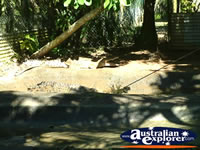 Shady Areas of Innisfail Johnstone River Croc Farm . . . CLICK TO ENLARGE