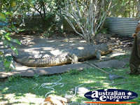 Innisfail Johnstone River Croc Farm Croc Viewing Area . . . CLICK TO ENLARGE