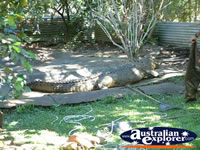 Crocodile Viewing Area in Innisfail Johnstone River Croc Farm . . . CLICK TO ENLARGE