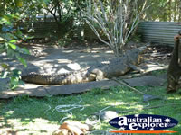 Innisfail Johnstone River Croc Farm Viewing Area of Crocodiles . . . CLICK TO ENLARGE