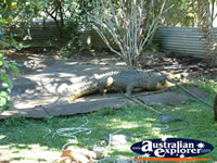 Viewing Area at Johnstone River Croc Farm in Innisfail . . . CLICK TO ENLARGE