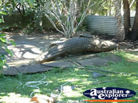 Viewing Area at Johnstone River Croc Farm . . . CLICK TO ENLARGE