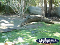 Croc at Johnstone River Crocodile Farm in Innisfail . . . CLICK TO ENLARGE