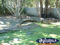 Barrierd Area at Johnstone River Croc Farm . . . CLICK TO ENLARGE