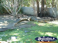 Johnstone River Crocodile Farm . . . CLICK TO ENLARGE