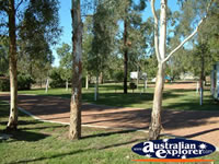 Roma Aussie Tourist Park Trees . . . CLICK TO ENLARGE