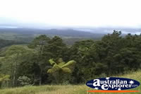 Millaa Millaa Lookout Forestry . . . CLICK TO ENLARGE
