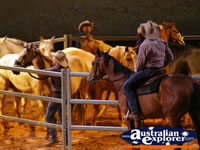 Australian Outback Spectacular Horses in Pen . . . CLICK TO ENLARGE