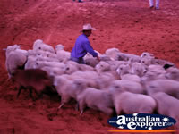Australian Outback Spectacular Sheep . . . CLICK TO ENLARGE