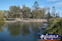 Duckpond in the Broadbeach Parkland . . . CLICK TO ENLARGE