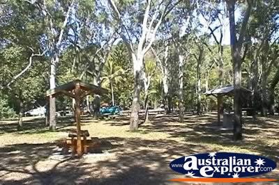 Cape Hillsborough National Park Mangroves Virtual Postcard