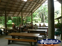Eating area in Cape Tribulation . . . CLICK TO ENLARGE