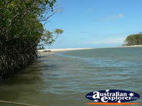 Water in Cape Tribulation . . . CLICK TO ENLARGE