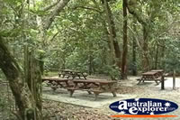 Cape Tribulation Picnic Area . . . CLICK TO ENLARGE