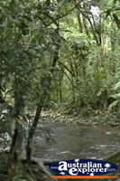 Cape Tribulation Rainforest Creek . . . CLICK TO ENLARGE