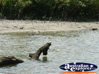 Crocodile underwater at Coopers Creek . . . CLICK TO ENLARGE
