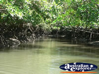 Mangroves on Coopers Creek Waterway . . . CLICK TO ENLARGE