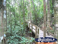 Boardwalk within Daintree Rainforest . . . CLICK TO ENLARGE