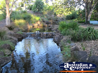 Hidden Creeks at the Gold Coast Botanic Gardens . . . CLICK TO ENLARGE