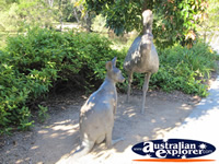 Australian Wildlife Statues . . . CLICK TO ENLARGE