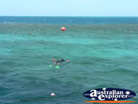 Snorkelling on the Great Barrier Reef . . . CLICK TO ENLARGE