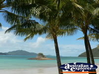 Palm Trees on the Beach at Hamilton Island . . . CLICK TO ENLARGE