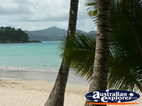 Hamilton Island Beach . . . CLICK TO ENLARGE