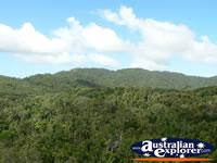 View over Kuranda Forest . . . CLICK TO ENLARGE