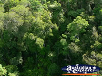 View above Kuranda Forest . . . CLICK TO ENLARGE