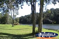 Kuranda Parkland . . . CLICK TO ENLARGE