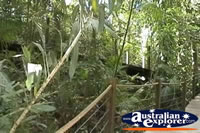 Kuranda Skyrail Rainforest Boardwalk . . . CLICK TO ENLARGE