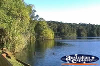 View of Lake Eacham . . . CLICK TO ENLARGE