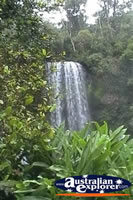 View of Millaa Millaa Falls . . . CLICK TO ENLARGE