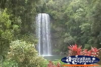 The Beautiful Millaa Millaa Falls . . . CLICK TO ENLARGE