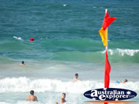 People swimming on Noosa Beach . . . CLICK TO ENLARGE
