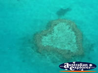 Beautiful Heart Reef . . . CLICK TO ENLARGE